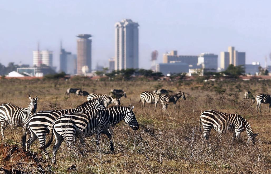 пока туристы фотографируются в david sheldrick wildlife trust nursery в пределах национального парка найроби